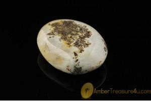 UNIQUE BLUISh COLOR Genuine BALTIC AMBER Stone ST18