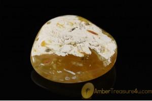 UNIQUE COLOR Genuine BALTIC AMBER Stone ST20
