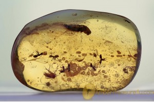 Swarm of ANTS & Bristletail Inclusion BALTIC AMBER 1598