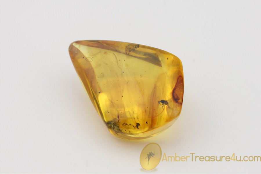 Genuine Polished BALTIC AMBER Stone w Inclusion - FLY