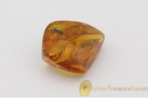 Genuine Polished BALTIC AMBER Stone w Inclusion -  MARSH BEETLE