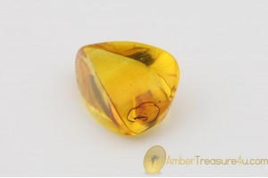 Genuine Polished BALTIC AMBER Stone w Inclusion -  WASP