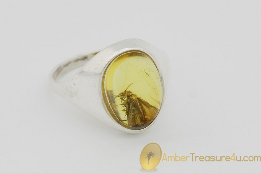 Genuine BALTIC AMBER Silver Ring 8.5 - 18.5mm w Fossil Inclusion - CADDISFLY