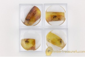 Lot of 4 Well Preserved Insects in Genuine BALTIC AMBER in Boxes