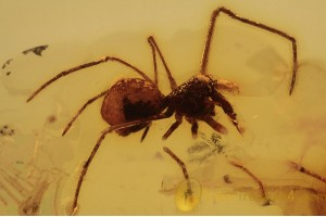 ARCHAEIDAE Eoarchaea Assassin Spider in BALTIC AMBER 1643