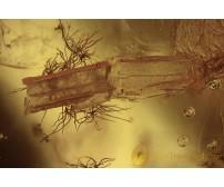 REPTILIA Lizard Skin Fragment Inclusion BALTIC AMBER 1962