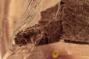LEPIDOPTERA Large Case Catterpillar Inside BALTIC AMBER 2334