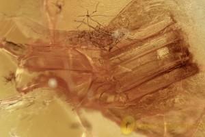 LIZARD REPTILIA SKIN Rare Multi Segmented Inclusion BALTIC AMBER 2454