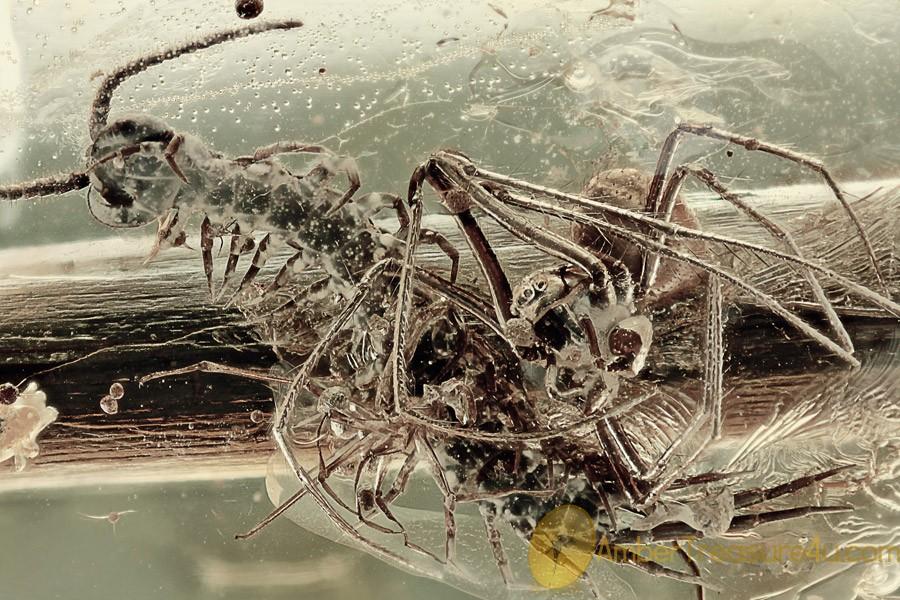 PERFECT SCENE Centipede & Spider + More Inclusion BALTIC AMBER 2414