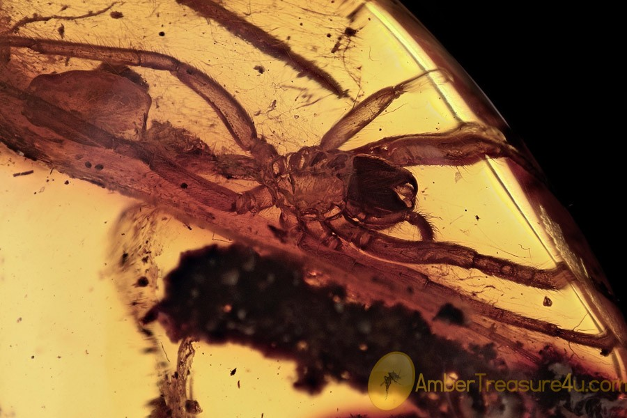 HUGE Spider Aranea Exuvia in Cobweb Inclusion BALTIC AMBER 2695
