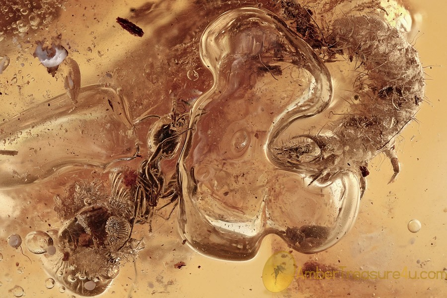 GREAT SCENE Ant & Beetle Larvae Hold Air Bubble BALTIC AMBER 2778