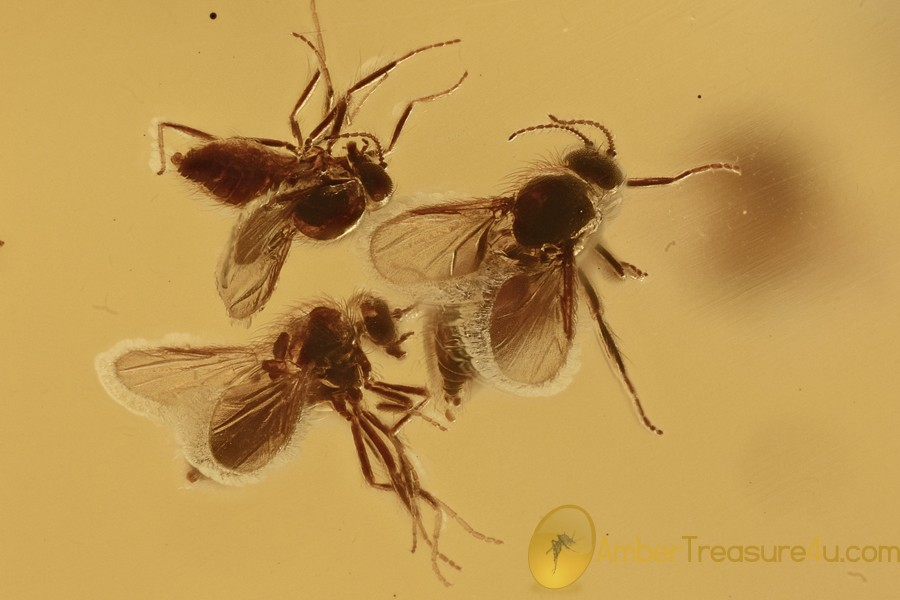 8 Biting Midges SUPERB TRIO Inclusion Genuine BALTIC AMBER 5.9g  2967
