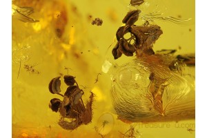 2 Great OAK FLOWERS & More in BALTIC AMBER 339