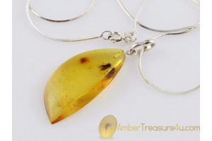 FOSSIL Caddisfly in BALTIC AMBER Pendant Silver Chain 18