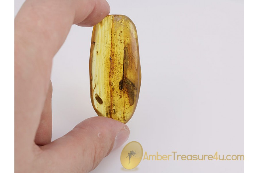 ISOPTERA Giant TERMITE Genuine BALTIC AMBER 203